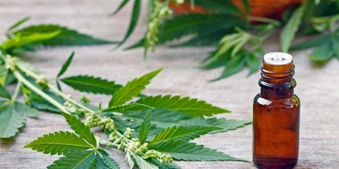 Aceite de cannabis: reclaman habilitar su producción pública en Santa Fe