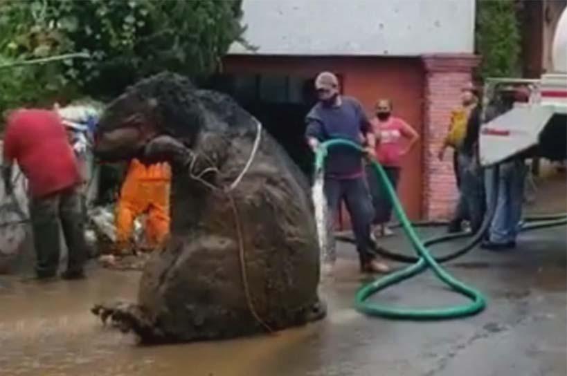 Parecía una Rata gigante